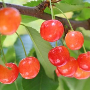 冷えて脚がむくんだり、腰痛、ひざ痛になる人が食べると良いフルーツ薬膳
