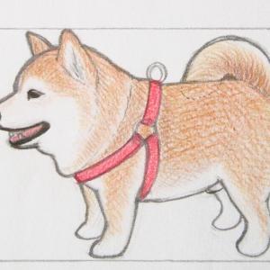 柴犬ゆずくんストラップの制作過程♥ ~犬毛も入っています~