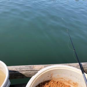 筏かかり釣り② 名港周辺 19