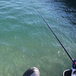 名港周辺㊳ フカセ釣り