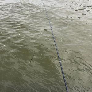 名港周辺⑰ フカセ釣り