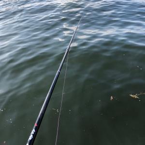 名港周辺㉙ フカセ釣り