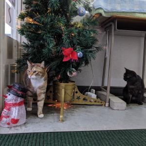 冬期講習のお知らせ。クリスマスツリー出しました
