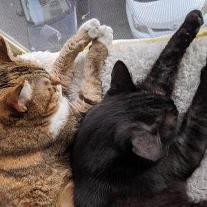 寒くなったら猫団子♪