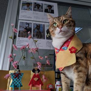 猫の日。ひな飾り始めました♪