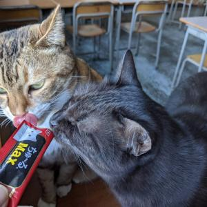 ネコ・ヤギそしてちゅーるMAX!