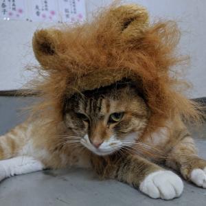 ライオンキング?