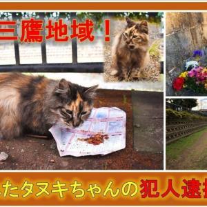 """""""**悲しい事件が起こりました。言葉を失うほどのとても惨い猫の殺傷事件です。この子の痛..."""""""