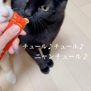 *猫まっしぐら*