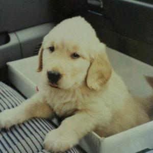 愛犬の思い出