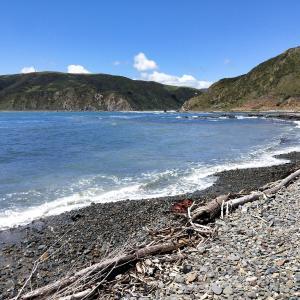 ニュージーランドのワイルドなビーチ