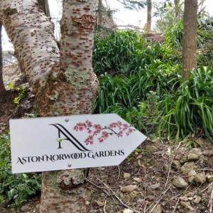 レベル2 Day5 桜ガーデンに行ったけど花見にはまだ早かった