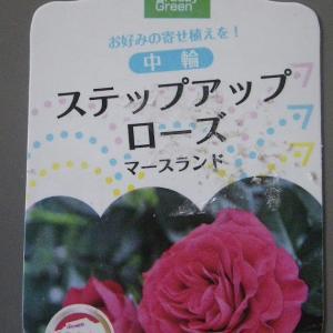 バラの初心者が小さな鉢植えやミニ盆栽にチャレンジ