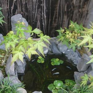 梅雨の時期は水草や樹木の成長が盛んです。