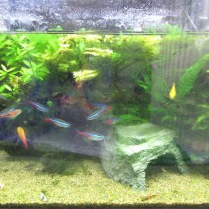 【熱帯魚水槽】水質汚染でエビが死に緊急水入れ替え