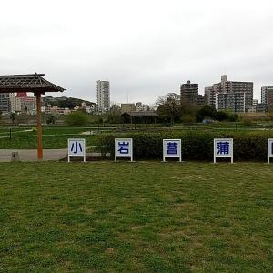 【息ぬき】小岩菖蒲園に行きました。