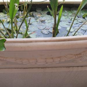 不要不急の外出禁止だから、春の水換えを行う(2)チョウセンブナの容器