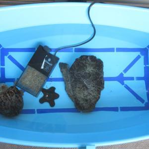 ミシシッピニオイガメのミッピーちゃん(68)屋外飼育容器の引っ越しの巻