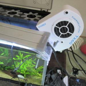 【熱帯魚】梅雨明けで夏の猛暑に備えてクーラーを設置するの巻
