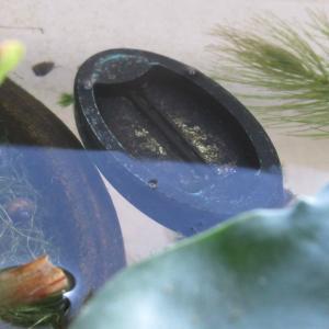 【メダカ・金魚飼育】メラミンスポンジで「浮かべる水温計」の黒い汚れを落とす