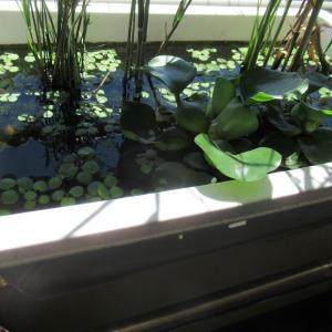 【魚たちの夏】水草の隙間から水の中の世界を見て涼む