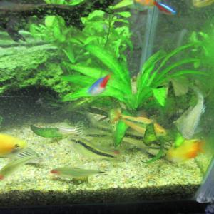 【熱帯魚水槽】石巻貝が大量に死んでいく