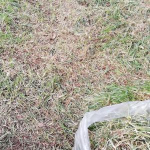 芝生の撤去〜花咲く庭を夢見て