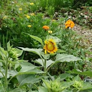7月前半のいきいきふれあい市川新田の庭