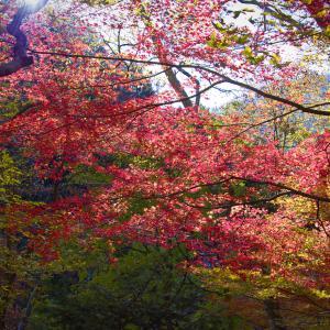 小田深山渓谷の紅葉を見に行きました