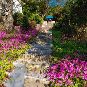 潮見山を下山、喰わずの芋跡と明見神社