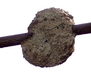 スズバチの巣は芸術建築 中に入っていたモノは・編