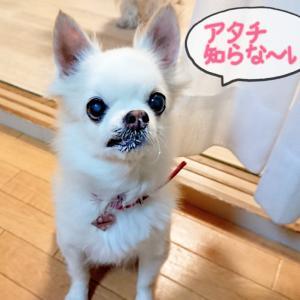 ■こまちゃん (お茶目な子)