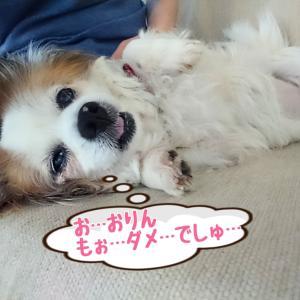 おりんちゃん (ダメでしゅ…)