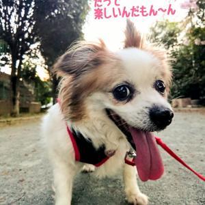 おりんちゃん (走る~?)