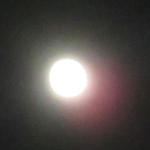 昨日の夜の月