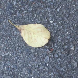 3枚の落ち葉の写真