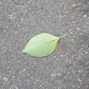 緑色の落ち葉