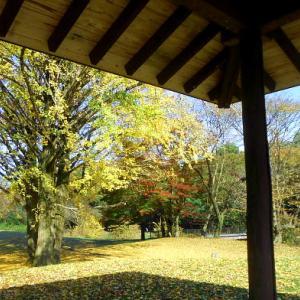 ちょっとそこまで 2020 11月27日野川公園