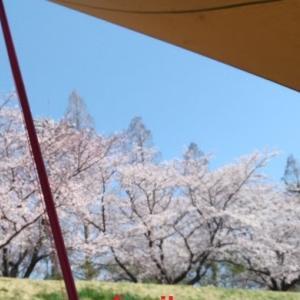 日帰りお花見キャンプに大活躍のコンパクトタープ【テンマクデザインムササビウィング】
