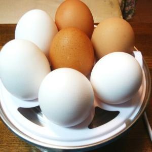 朝の卵タイム