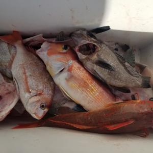 2月22日(金) 平日釣行
