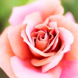 【おうし座新月】あなただけの才能を開花する時♡/喜多見狛江 ヨガアロ