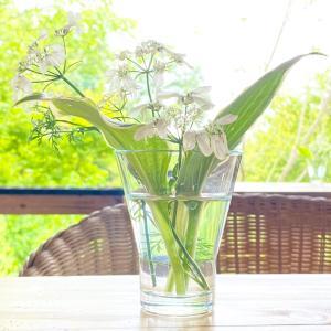 【夏至】頑張った自分にありがとう♡物語の始まりへ♡/喜多見狛江ヨガアロマ 薬膳 サラフロウ