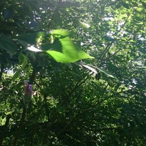 見逃さないで!夏から秋体調変化のサイン/喜多見・狛江 少人数ヨガ セルフケア サラフロウ