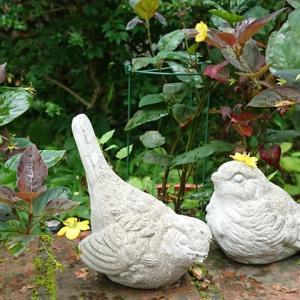 ①おしゃれな小鳥リシマキア ②シモツケソウ ③ホワイトガーデン ④キキョウ ⑤ヒオウギアヤメ