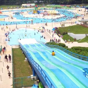 本日より一万人プールがオープン!キクラゲの成長はInstagramでも!