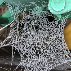 凍った蜘蛛の巣