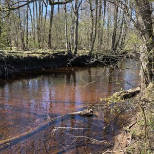 春の小川と牛乳パックボート