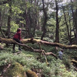 新たな森散策