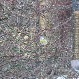 冬の庭に訪れる小鳥たち